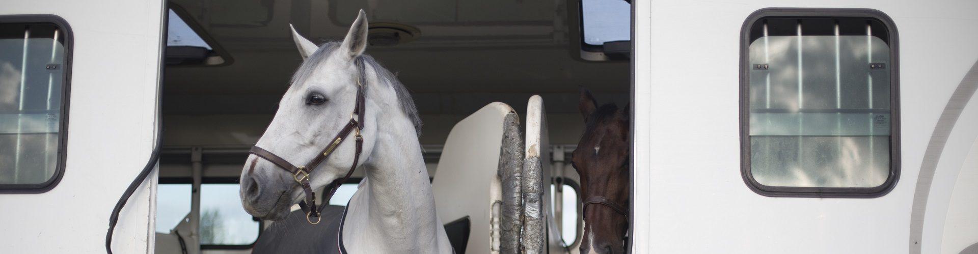 Paard_vrachtwagen